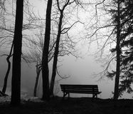 Park bench in the mist. With trees Stock Photography