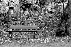Park bench with oak tree. Park bench inviting to calm down - black and white Royalty Free Stock Photo