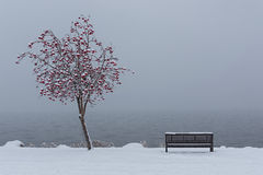 Park Bench on Okanagan Lake Kelowna British Columbia in Winter. A snowy scene of a park bench by Okanagan Lake near Kelowna British Columbia Canada in Winter Stock Photos