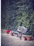 Park Bench. Old bench surrounded by flowers. Florence, Tuscany Royalty Free Stock Photo