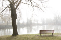 Park bench overlooks misty lake Stock Image