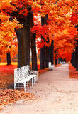 Park bench in the park in fall time Stock Photos