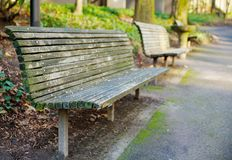 Park Bench perspective. On a hill trail in Portland diminishing to soft focus Stock Photos