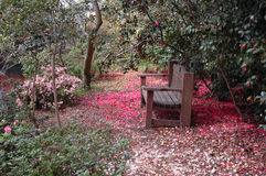 park bench with pink and red azaleas Royalty Free Stock Images