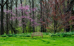 Park bench and red buds  in Michigan Royalty Free Stock Images