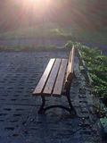 Park bench in soft autumnal sun Royalty Free Stock Image