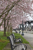 Park Bench at Spring Time. Enjoying spring time at waterfront park on a bench royalty free stock image