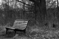 Park bench in a still forest Royalty Free Stock Photos