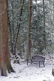 Park bench and stump Royalty Free Stock Photo