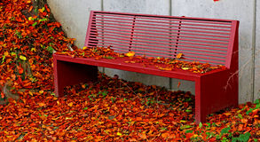 Park bench surrounded by autumn yellow leaves. Royalty Free Stock Image