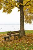 Park bench and tree on lake Chiemsee, Germany Stock Photography