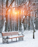 Park bench and trees covered by heavy snow Royalty Free Stock Images