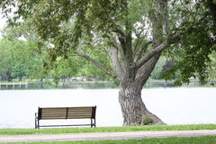 Park Bench and Twisted Tree Royalty Free Stock Images