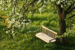 Park bench under blossoming tree Royalty Free Stock Images