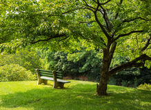 Park bench under flowering dogwood tree. Lonely single park bench or seat in the shade of a flowering dogwood tree in the shadows of the branches Stock Photo