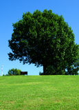 Park bench under green tree Stock Photo