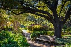 Park Bench Under Oak Tree royalty free stock photos