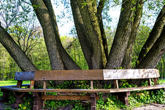 Park bench under old tree Royalty Free Stock Photography