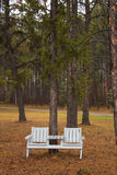 A park bench under a pine tree Royalty Free Stock Photo
