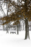Park bench under snow covered trees with orange autumn leaves on Stock Image