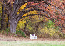 Park Bench under a tree Stock Image