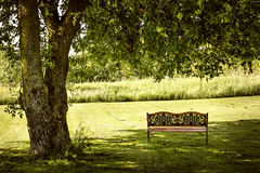 Park bench under tree Stock Image