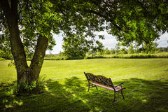 Park bench under tree Royalty Free Stock Photo