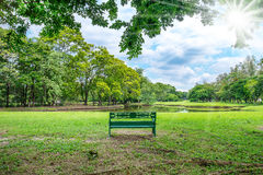 Park bench under tree near lake. Sunny summer park with tree , green grass ,lake and bench Royalty Free Stock Photography