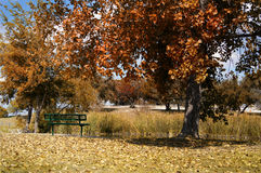 Park bench. A park bench under the trees during fall Stock Photography