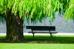 Park Bench with Weeping Willow stock photo