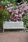 Park bench. White park bench surrounded by red, white and pink rose blossoms stock photography