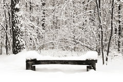 Park bench at winter Stock Image