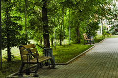 In the park on a bench. Wooden bench in the city park, the small green trees lane Royalty Free Stock Images