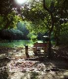 Park bench in woods forest bright light Royalty Free Stock Images