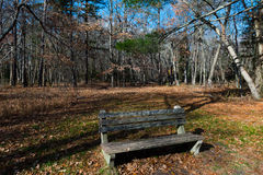 Park Bench in the Woods. A single park bench for relaxing in the woods Stock Images