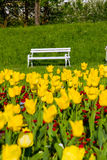 Park bench and yellow tulips Stock Images