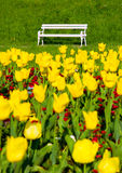 Park bench and yellow tulips Royalty Free Stock Images