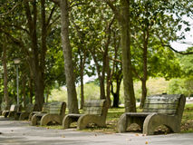 Park Benches. A row of benches, made from concrete and wood, shaded by tall straight trees beside each bench, lined up a walking path in a public park royalty free stock images