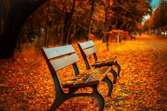 Park benches in autumn Royalty Free Stock Photo