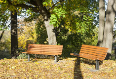 Park benches in autumn. Park benches in sunny autumn day Royalty Free Stock Images