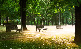 Park benches and fog. Park benches in a wooded area with fog rolling in royalty free stock photos