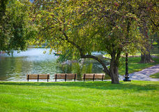 Park benches in front of pond Stock Photography