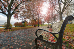 Park Benches in the Park in Autumn Stock Images