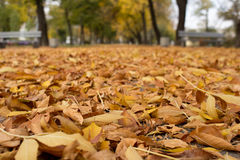 Park. Benches in a quiet autumn park Stock Images