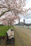 Park Benches under Cherry Blossom Trees Stock Photos