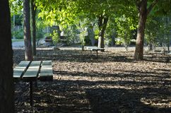 The park benches under the park trees. A view of the park benches under the trees in the park covered in shade and sunlight from the cool summer evening Royalty Free Stock Image