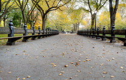 Park Benches. Wood and Steel benches in open park royalty free stock photos