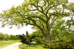 Park with big old green tree during spring season Stock Images