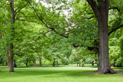 Park with big trees. Park with big green trees Stock Photos