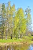 Park bij de lente Royalty-vrije Stock Afbeeldingen